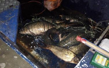 Riba vraćena u vodu