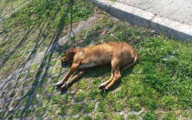 Jedan od otrovanih pasa