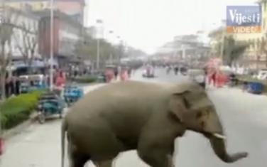 Slon na ulici u kineskom gradu