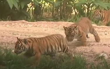 Novi članovi zoo vrta