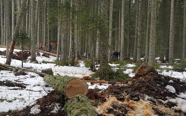 Na lokalitetima gdje je planirano postavljanje bungalova nije dozvoljena sječa stabala u procesu montaže objekata