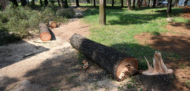 Posječeno drveće u parku na Kruševcu