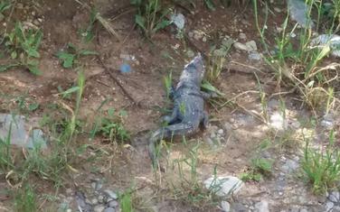 Fotografija životinje u blizini Gorice