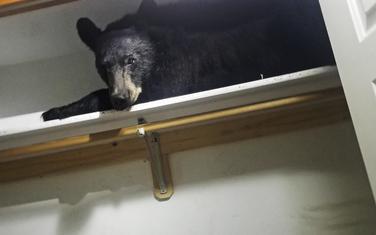 Medvjed u ormanu
