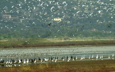 Raj za ptice: Ulcinjska solana