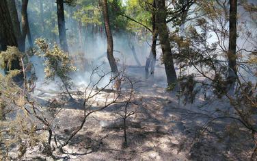 Požar lokalizovan i ugašen