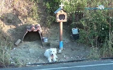 Mnogi mediji prenijeli su vijest o ovom psu