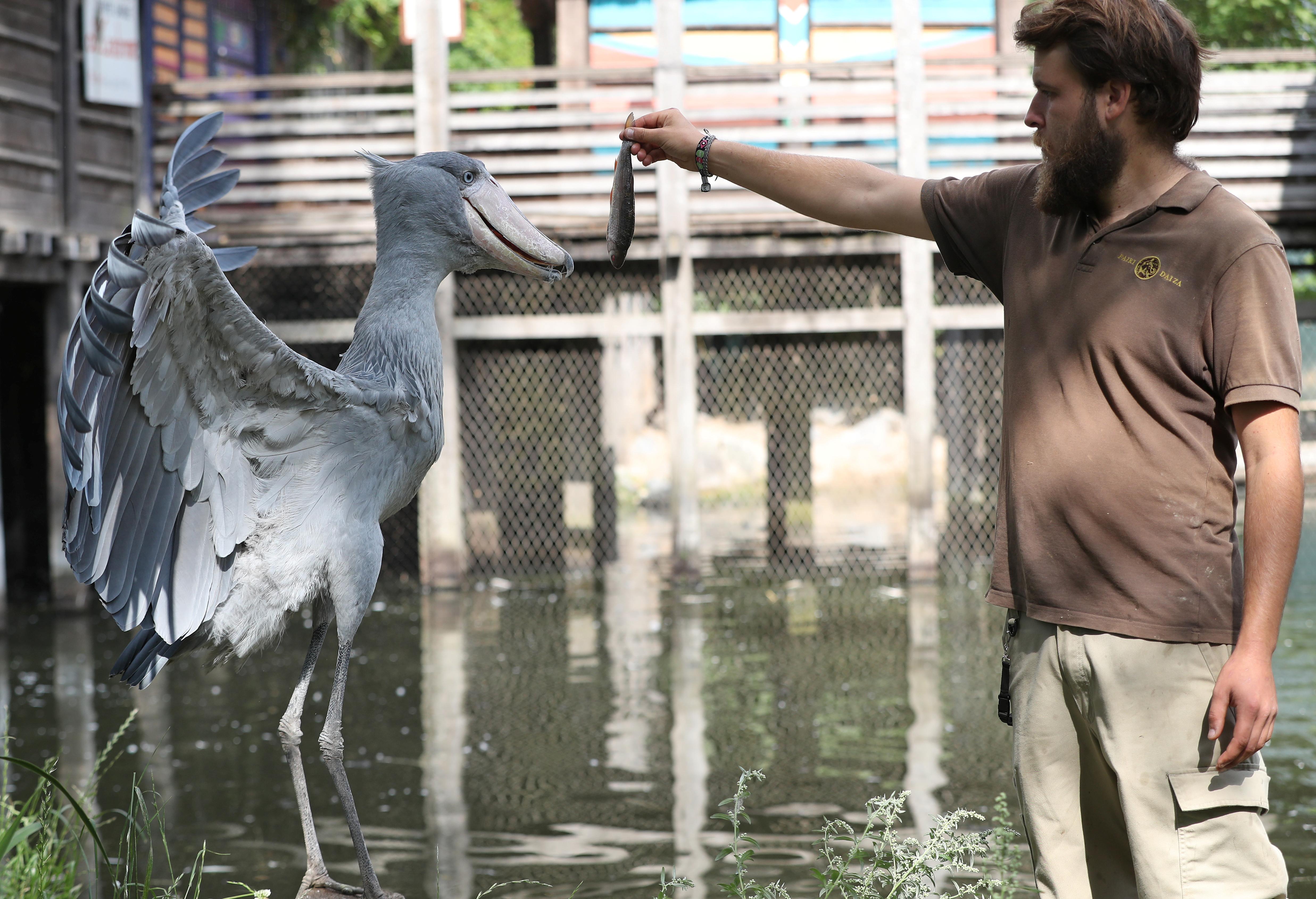Iz belgijskog zoo vrta (foto: YVES HERMAN/Reuters)