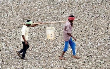 Indijski radnici nose kofu vode iz bare za vreme suše u Čenaju