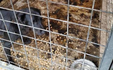 Sklonište za napuštene životinje u Beranama