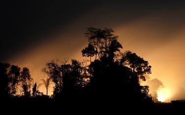 Amazonija ovog ljeta