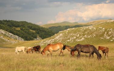Bošković tvrdi da poligon nije smetnja zaštiti prirode na Sinjajevini