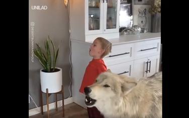 Dječak i vučjak
