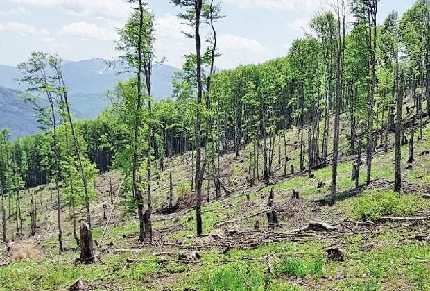 Opustošena šuma u Gradišnici