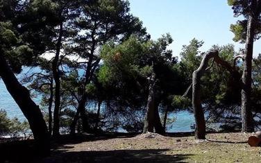 Borova šuma u Ulcinju