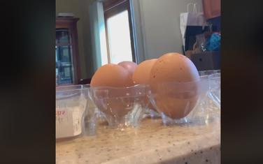 Neobična školjska jaja