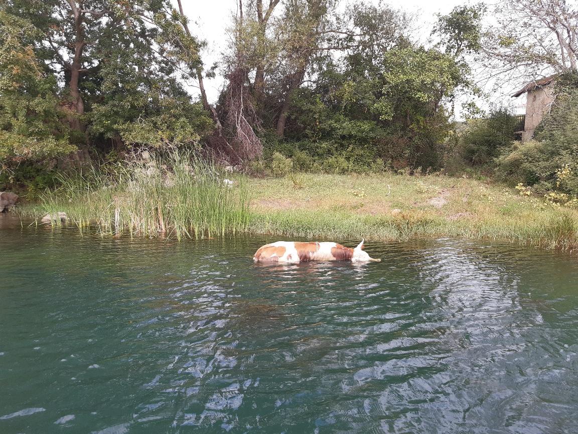 Uginule životinje u rijeci