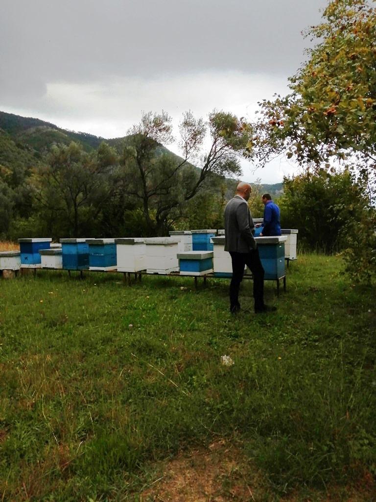 Gvozden Balšić