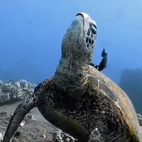 Uspavana kornjača
