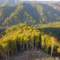 U Rumuniji se nalazi jedna od najvećih netaknutih šuma u Evropi, ali je nelegalna seča sve veća pretnja za nju