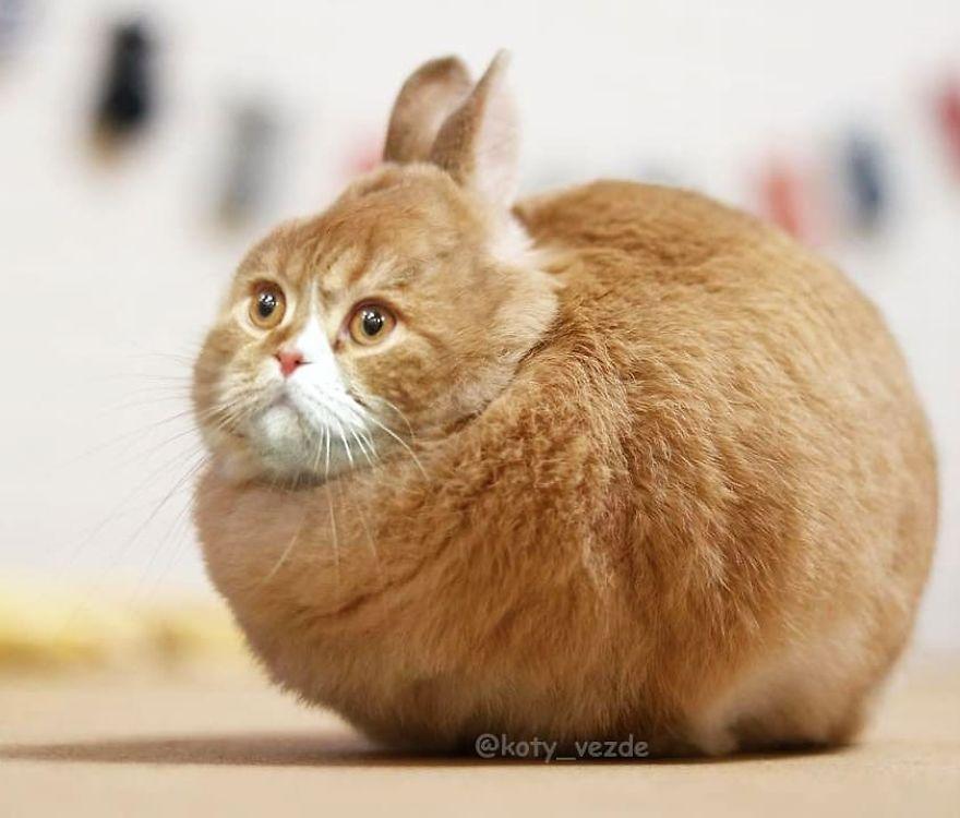 Neobična izdanja mačaka (foto: Koty Vezde)