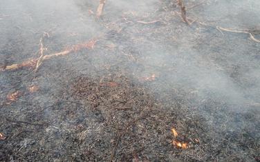 Požar na planini Lisi