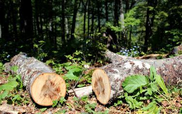 Sjeku se i neoznačena stabla