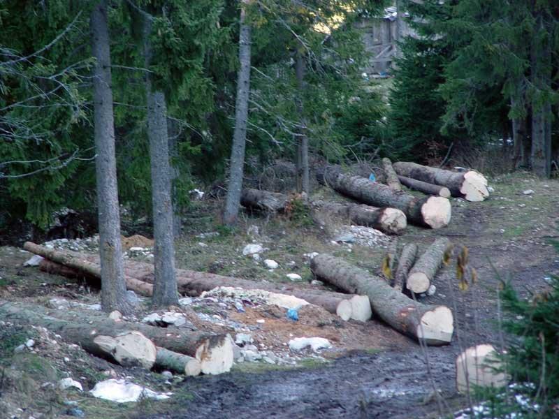 Uništavanje šume u Nacionalnom parku Durmitor
