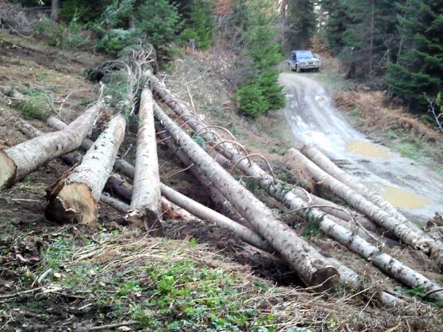 Trošenje šuma za najniži stepen obrade sirovina
