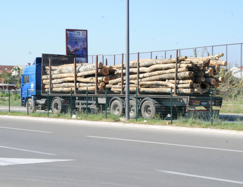 Izvoz drvne građe