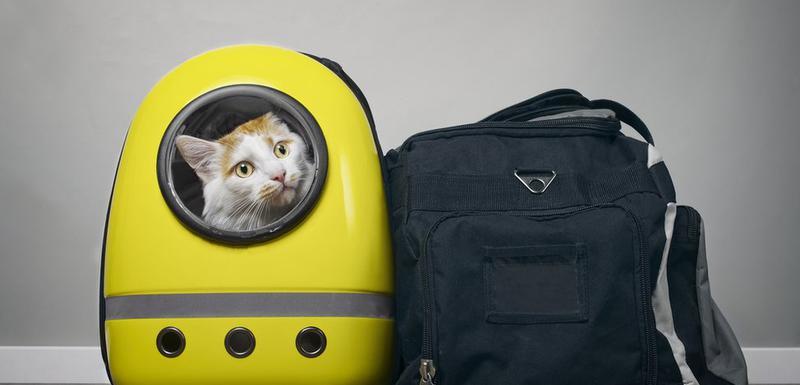 Mačka u rancu (arhivska fotografija)