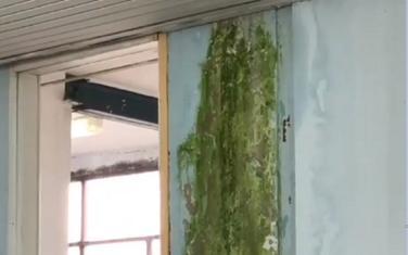 Zeleni zidovi škole