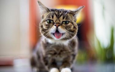 Mačka je imala više od 5.5 miliona fanova na Fejsbuku i Instagramu