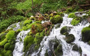 Izvor rijeke Lještanice