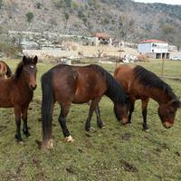 Konji koji lutaju