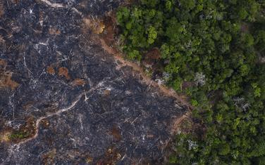 Dio Amazonije uništen u požarima