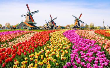 Holandija, ilustracija