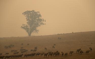 Australiju pogodili nezapamćeni šumski požari