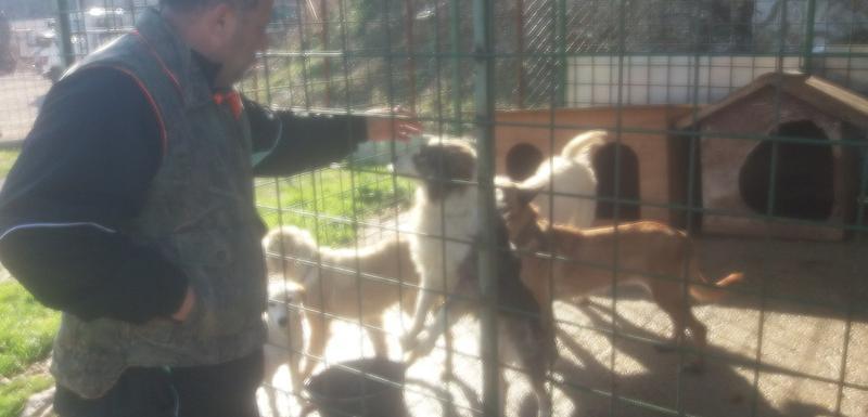 Azil za pse u Ulcinju