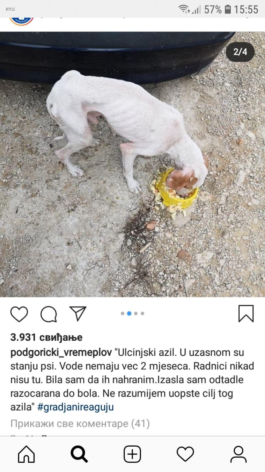 Jedna od slika izgladnjelog psa objavljena na Fejsbuku