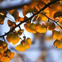 Tokom jeseni ima nevjerovatne boje
