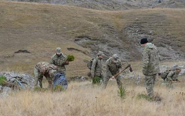 Pripadnici Vojske zasadili su 3.000 od planiranih 100 hiljada sadnica invazivne vrste smrče i bora