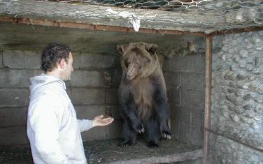 Za svaki par mrkog medvjeda neophodno 300 kvadrata