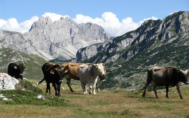 Povećanje proizvodnje mlijeka je jedan od ciljeva