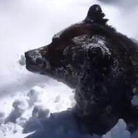 Medo se budi iz zimskog sna
