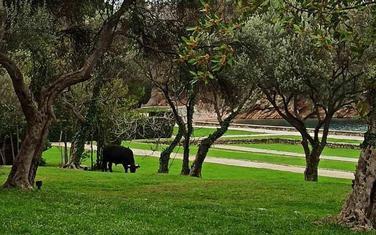 Jedna od životinja u parku