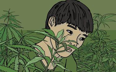 Dječak iz Vijetnama postao rob na britanskoj farmi kanabisa