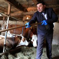 Milivoje Miličic na svojoj farmi krava