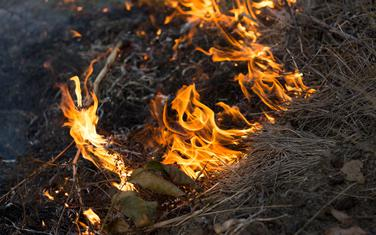 Vatra, požar, trava